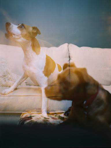 Long exposure shot on Kodak Portra 400, with a Fuji GA645xxxx, of Katy's furbaby Zulu and friend Perry.